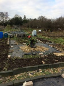 Allotment tips