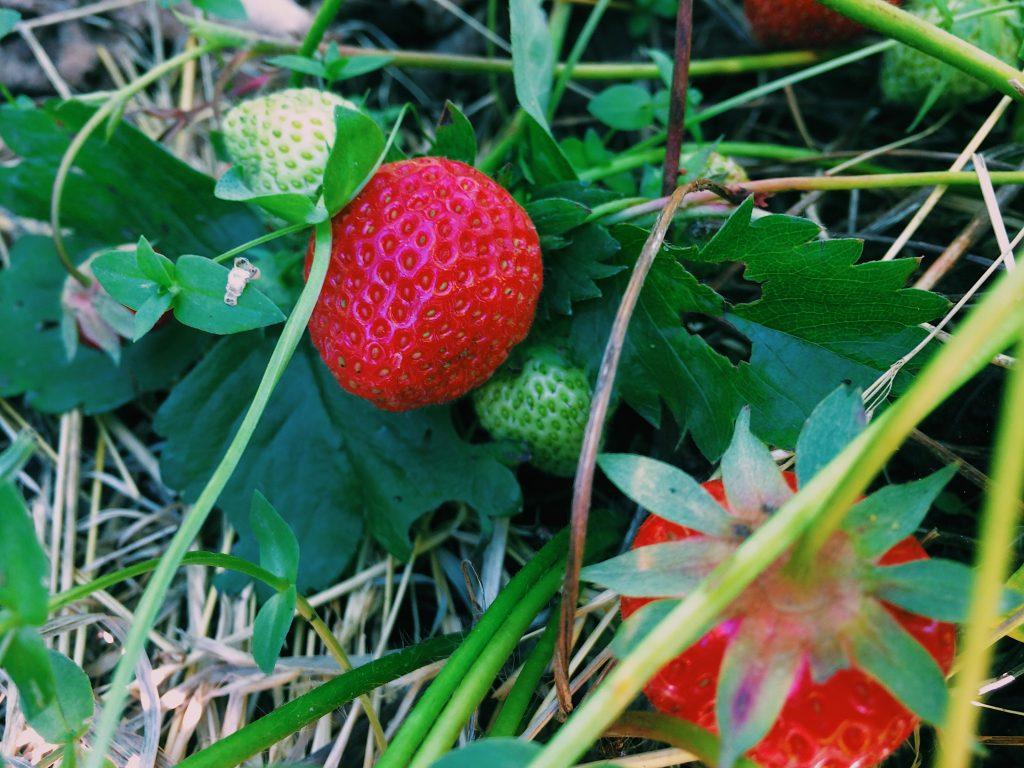 Seasonal Strawberries Strawberry & Peanut Butter Flapjacks