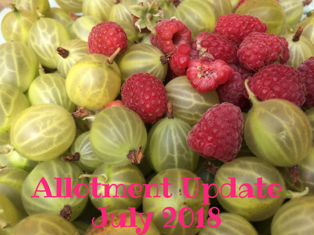 Allotment Update July